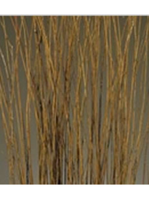 Asian Willow 5ft Natural