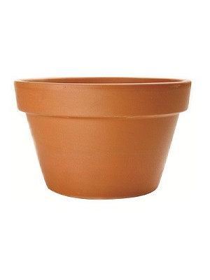 "Terracotta Pot Fern 4 1/4"" Dia"