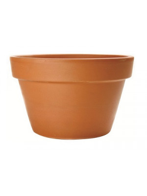 "Terracotta Pot Fern 7 1/2"" Dia"
