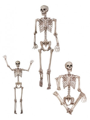 Life Size Skeleton 60in