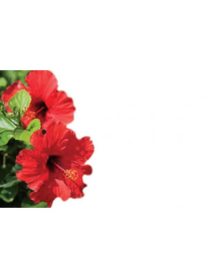 Enc Cd Hibiscus Red